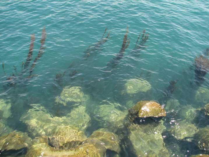 育毛に効果のある食事は?まさかワカメとか海藻類出すんじゃ。